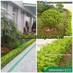 Dịch vụ chăm sóc khuôn viên cây xanh
