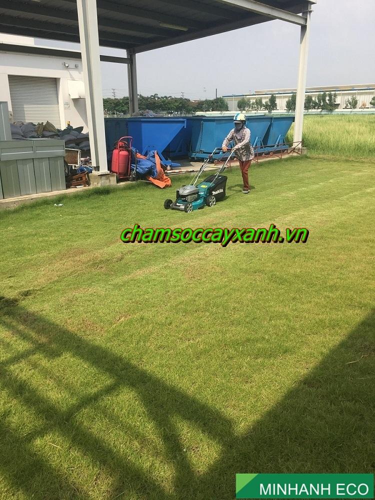 Dịch vụ chăm sóc khuôn viên cây xanh canh quan/ cắt tỉa cây cảnh/ cắt cỏ
